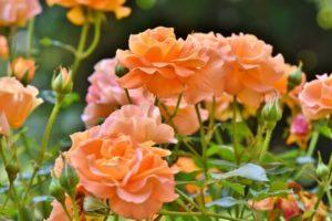 Quiz für angehende Gärtner/innen