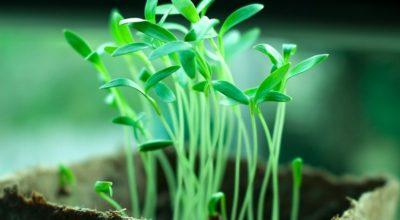 Saatguterkennung - Gartenbau
