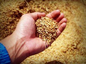Saatguterkennung - Landwirtschaft