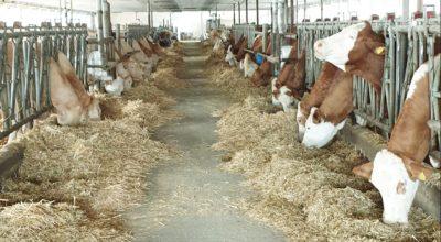Agrarproduktions- und Handels GmbH Donndorf